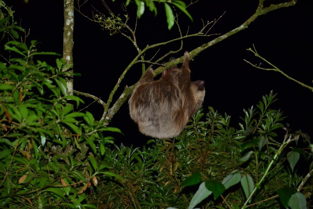 monteverde night hike