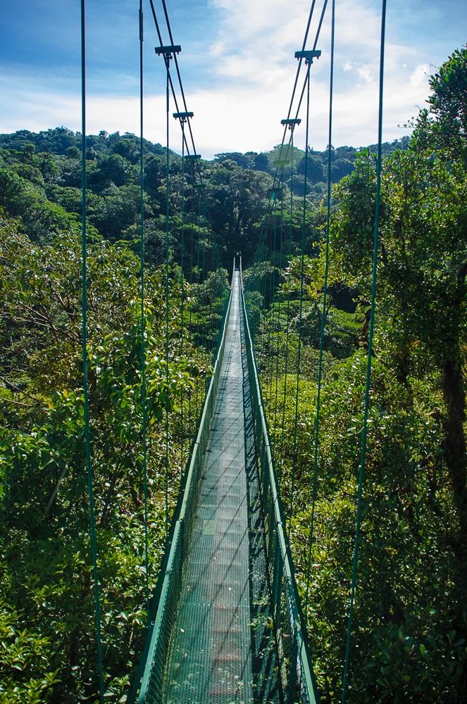 selvatura bridges