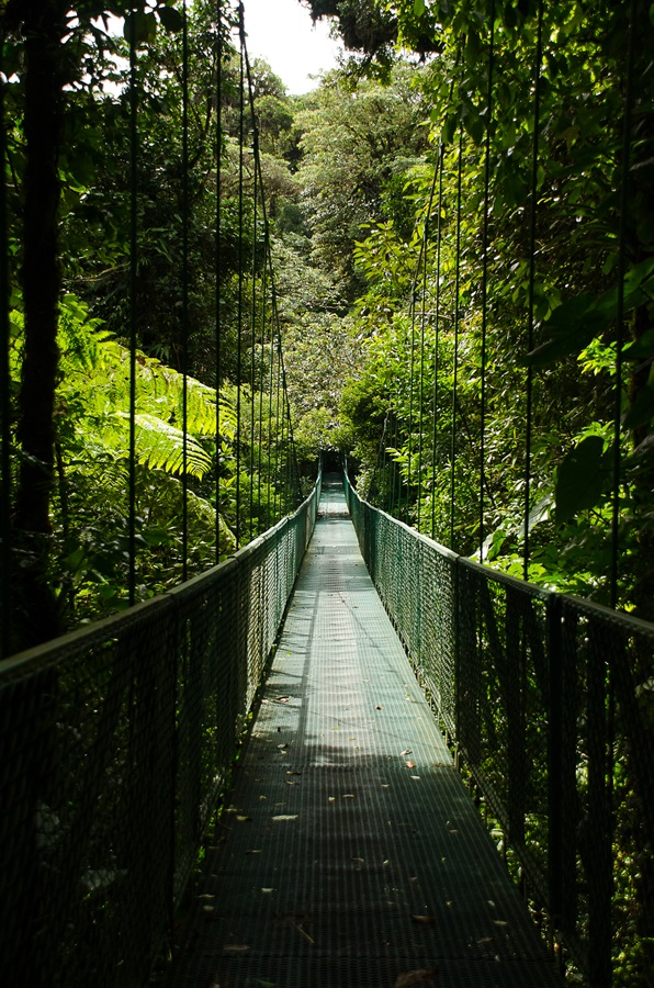 selvatura bridges