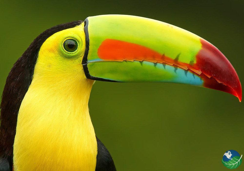 Birdwatching Monteverde