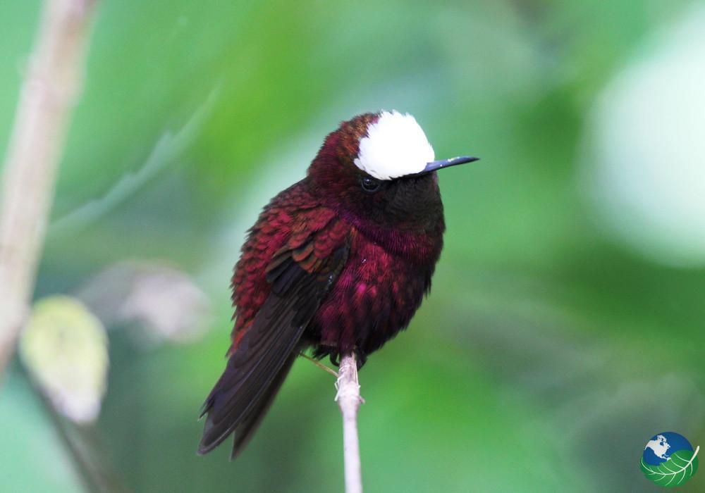 costa-rica-birdwatching-monteverde-6