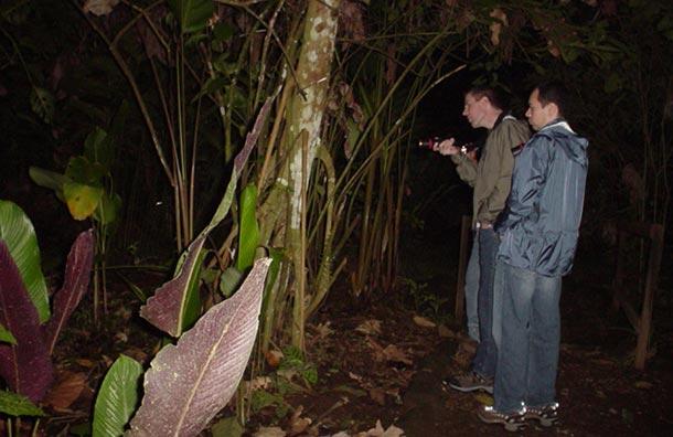 Kinkajou Nikght Hike Monteverde Cloud Forest