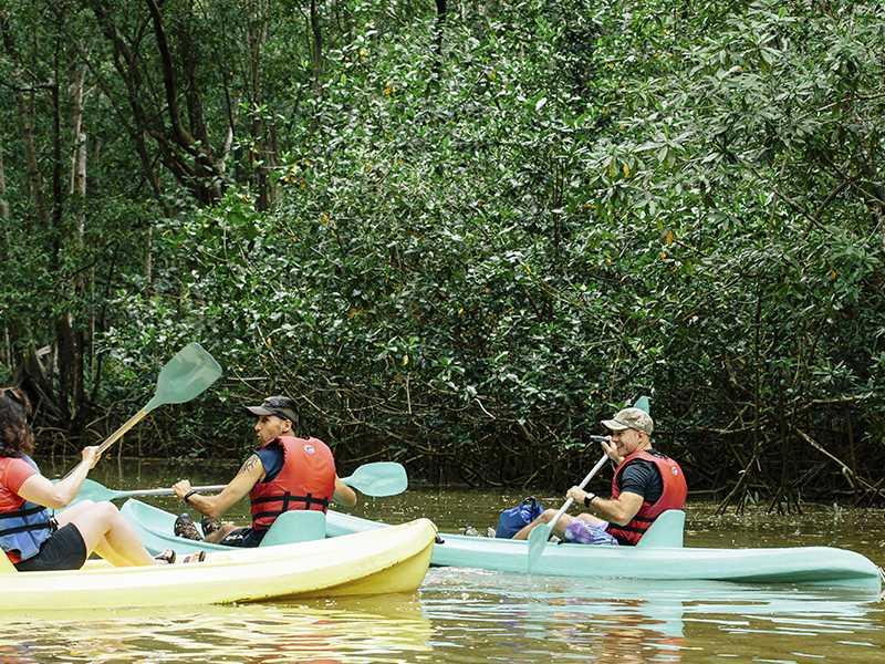 Damas Island Mangrove Kayaking