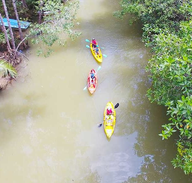 Damas Mangrove Kayaking