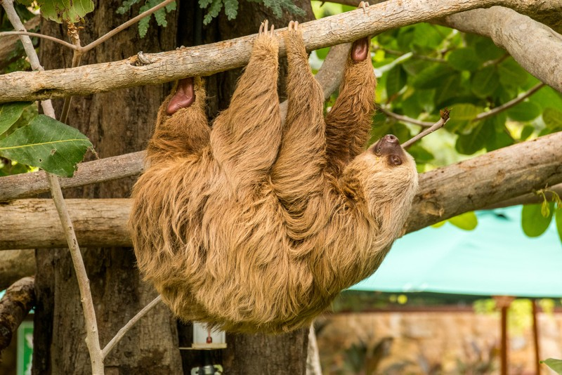 Animal Sanctuary Tour Guanacaste