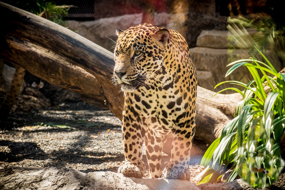 Diamante Animal Sanctuary 7