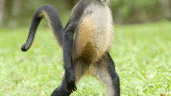Guanacaste Monkey Sanctuary