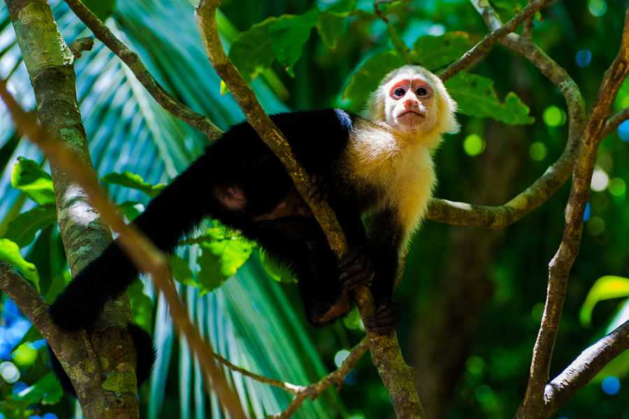 Guanacaste Monkey Sanctuary