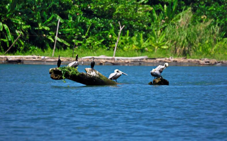 Tamarindo estuary tour