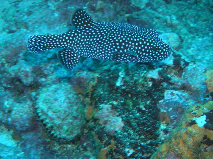 Costa Rica Scuba Diving Isla del Cano Drake Bay