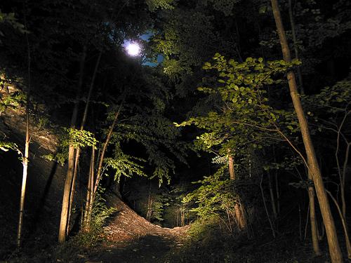 Night Jungle Hike Drake Bay