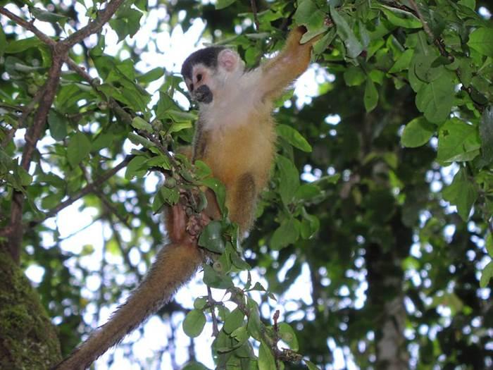 Tour Sirena Drake Bay Corcovado Costa Rica
