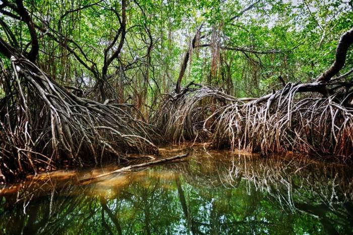 Drake Bay Mangrove Tour Corcovado