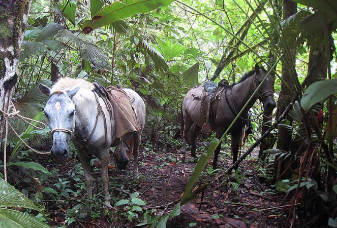 Horseback Riding Drake Bay Corcovado