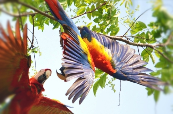 Drake Bay Zip Line Canopy Tour Corcovado