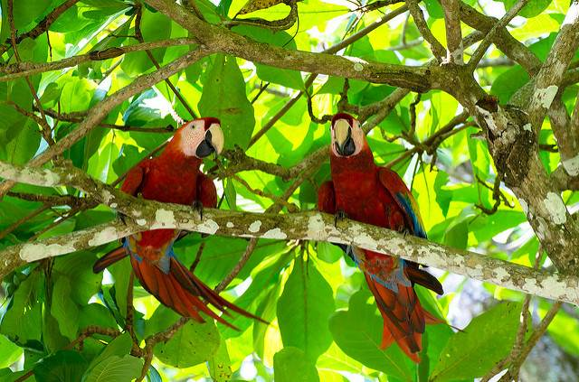 Birdwatching Dreak Bay Corcovado Osa Peninsula