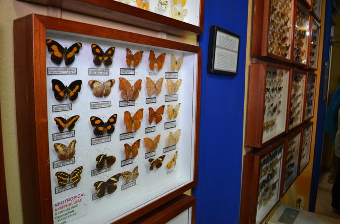 Insect exhibition Monteverde cloud forest
