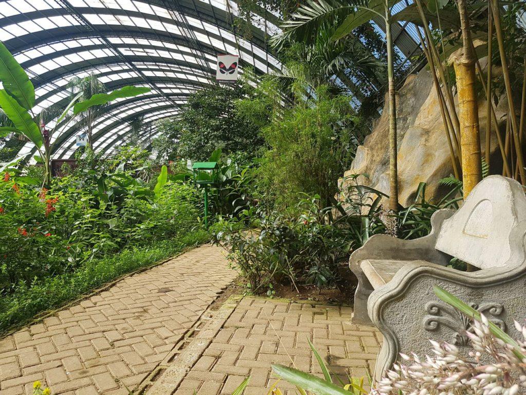 butterfly-garden-monteverde