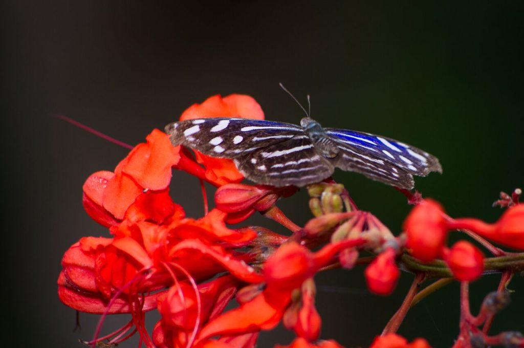 Monteverde Cloud Forest Butterfly Garden