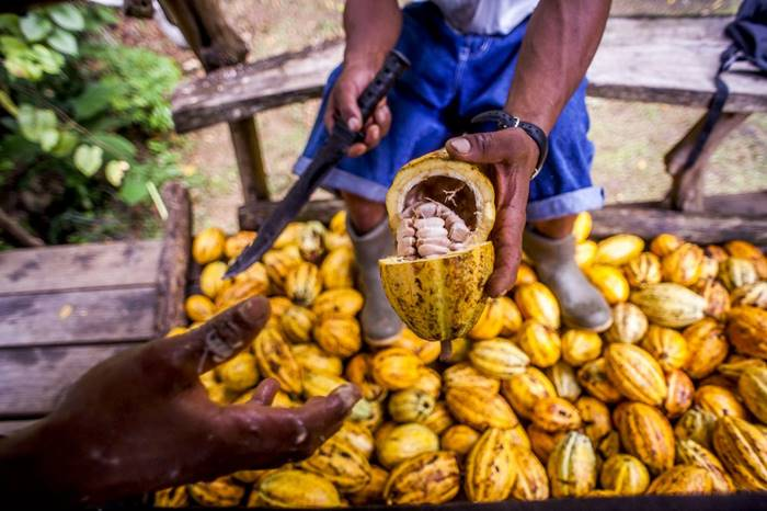 Chocolate Tours from Puerto Viejo Costa Rica