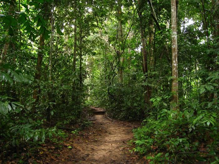 Gandoca Manzanillo Refuge Hike Tour