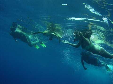 Snorkeling Tour Puerto Viejo Costa Rica